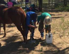 Hoof Care Training