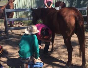 Hoof Care Training