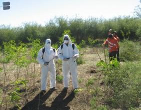 Poisons Training